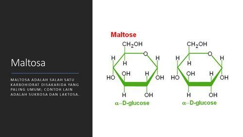 Apa itu Maltosa? lebih banyak otot dan